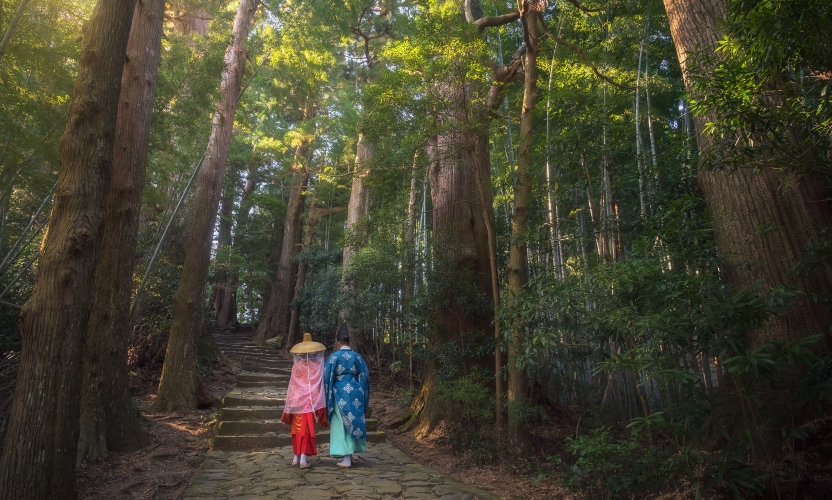 Cypress Forests of the Kumano Kodo