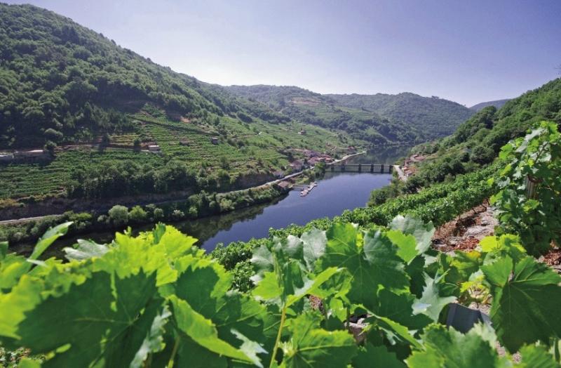 The Vineyards of Via Romana