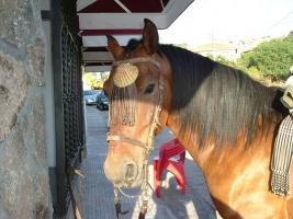 Camino de Santiago on Horseback