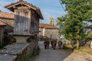 Camino Frances - Gentle Steps