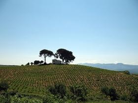 Via de la Plata Landscape