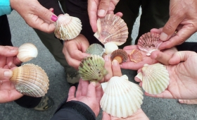 Find Your Scallop Shell on Finisterre's Golden Beach