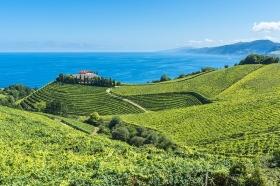 Txakoli Vineyards near Getaria