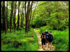 The Camino trail from Sarria