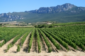 Vineyards of La Rioja
